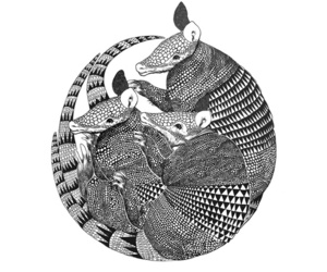 armadillo, illustration, and black and white image