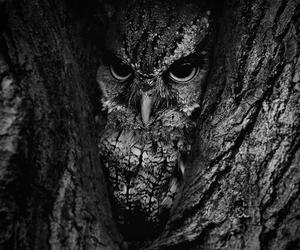 owl, tree, and animal image