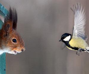 bird and squirrel image