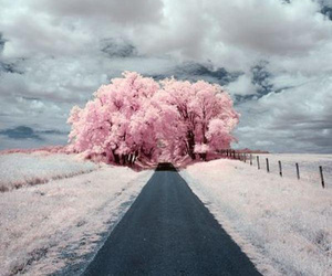pink, clouds, and tree image