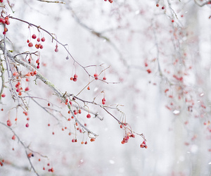 winter, beautiful, and nature image