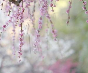 blossom, botanical, and happy image