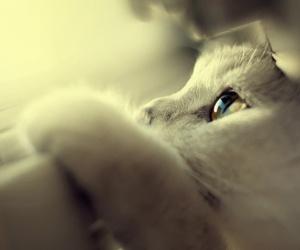 cat and sunshine image