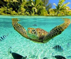 turtle, sea, and fish image
