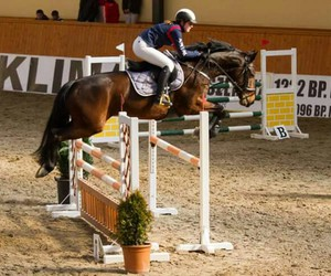 competition, horse, and international image