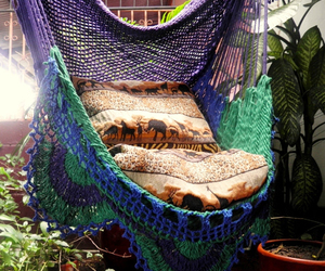 boho, chair, and hammock image