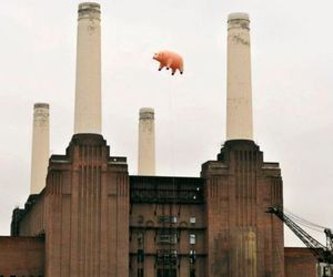 pig and Pink Floyd image