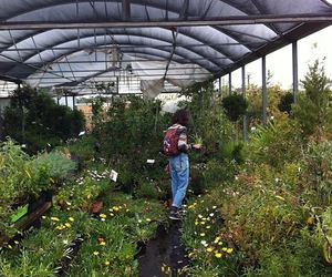 girl, green, and plants image