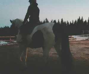 equestrian, horse, and spring image