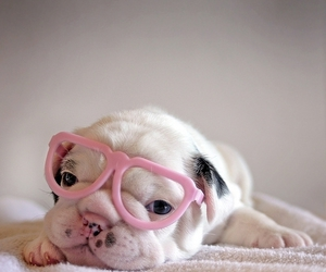 baby, glasses, and puppie image