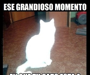 meme, funny, and Gatos image