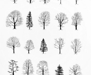 tree, nature, and drawing image