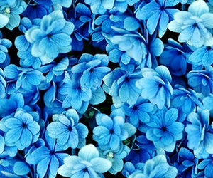 flowers, blue, and pink image