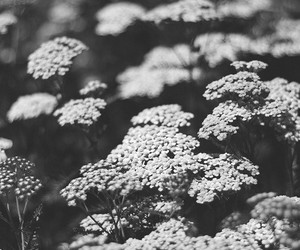 b&w, black and white, and flowers image