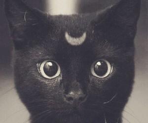 black *-* cat image