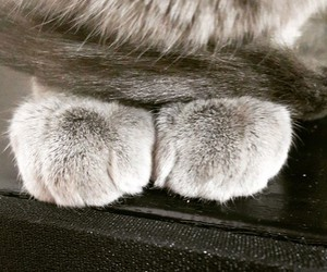 cat, patitas, and heechul image
