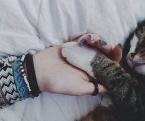 aw, cat, and grunge image