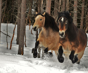 forest, horses, and snow image