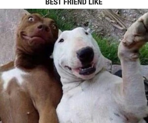 bff, fr, and friendship image