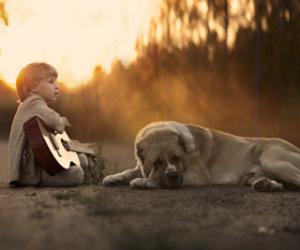 animals, children, and sunset image