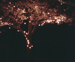 light, tree, and night image