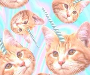 cat, unicorn, and wallpaper image