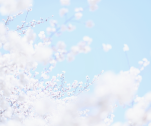 sky, flowers, and photography image