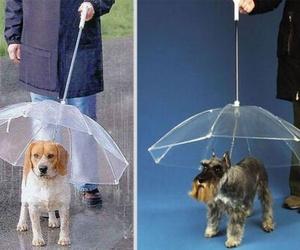 dog, umbrella, and leash image