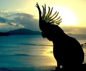 parrot and sunset image