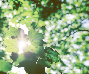 forest, sunlight, and green image