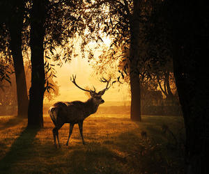 beautiful, deer, and fotography image