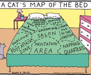 bed, map, and cats image
