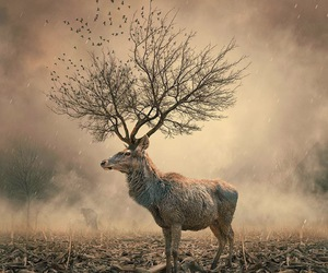 animal, deer, and tree image