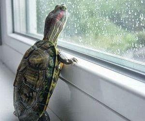 turtle, animal, and rain image