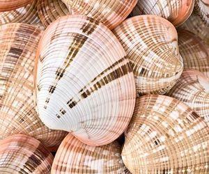 shell, sea, and seashells image