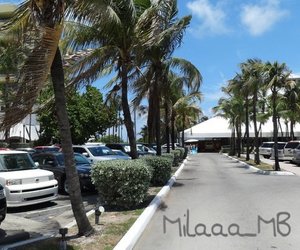 holiday, Miami, and travel image