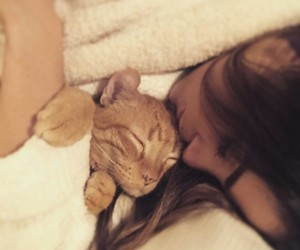 beautiful, bed, and cat image