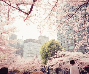 japan, sakura, and flowers image