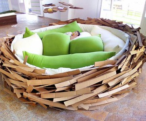 bed, nest, and bird image