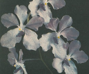 blue, flowers, and orchid image