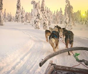dogs, snow, and sunrise image