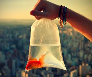 fish, animal, and city image