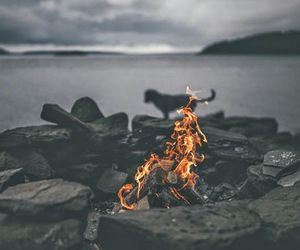 fire, dog, and sea image