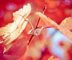 beige, leaf, and light image