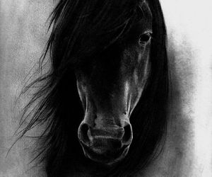 art, black horse, and drawing image