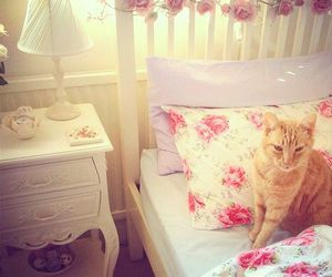 cat, room, and bedroom image