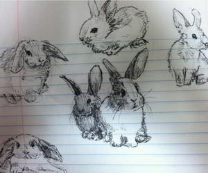 rabbit, drawing, and bunny image