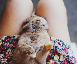 cute, girl, and rabbit image