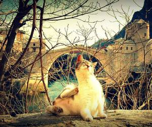 cat, mostar, and Bosnia image