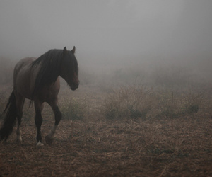 animal, horse, and mist image
